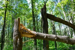 Fallen trees in the forest after a storm