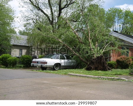 Fallen trees on a car in the driveway.