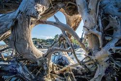 Fallen Trees on Jekyll Island, Georgia