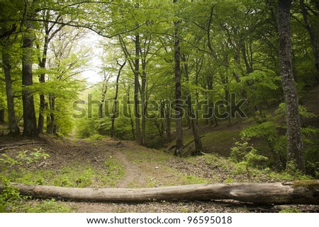 Fallen wooden trunk blocking the dirt road in a lush green spring forest