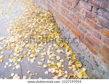 Fallen yellow autumn leaves. Selective focus. Selective focus. #1527197054