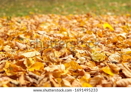 Fallen yellow dry leaves on the ground.  Background for design and inscription Zdjęcia stock ©