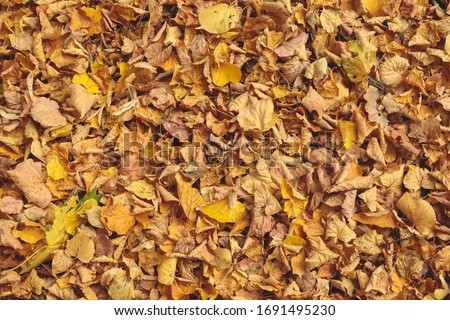 Fallen yellow dry leaves on the ground. Top view. Background for design and inscription Zdjęcia stock ©