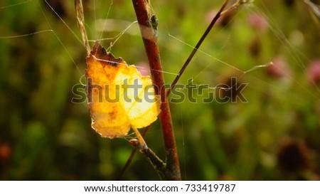 fallen yellow leaf #733419787