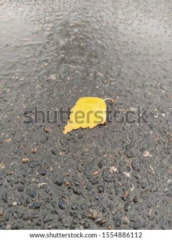 fallen yellow leaf on wet asphalt. wet leaf on grass #1554886112