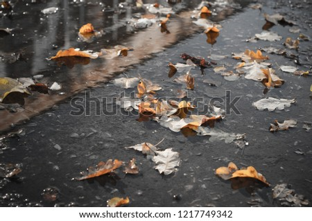 fallen yellow oak leaves, leaves in a puddle. Beautiful autumn background. discolored photo