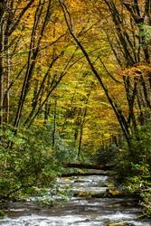 FallFoliage Canopy Over Appalachian Mountain Stream.