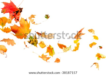 Falling and spinning autumn leaves isolated on white
