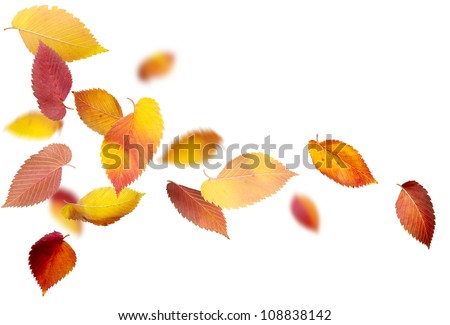 Falling and spinning autumn leaves on white background