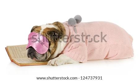falling asleep reading - english bulldog with boring book isolated on white background - stock photo