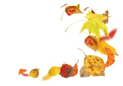 Falling autumn foliage isolated on white. Autumn leaves falling to the ground. Autumn leaves falling and spinning