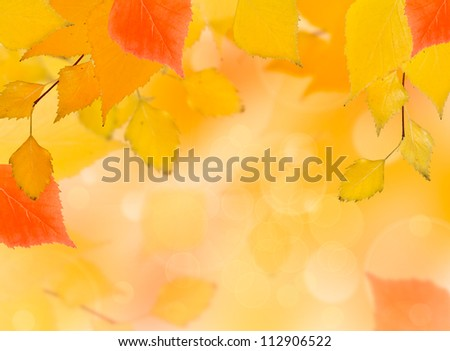falling autumn red and yellow birch leaves on a blurred background