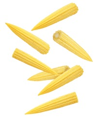 Falling baby corn, isolated on white background, clipping path, full depth of field