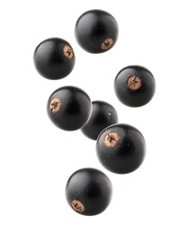 Falling Black currant isolated on white background, clipping path, full depth of field