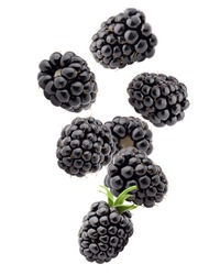 Falling blackberry isolated on white background, clipping path, full depth of field