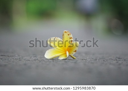 Falling flower in the road  #1295983870