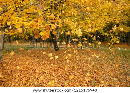 Falling flying leaves in autumn forest