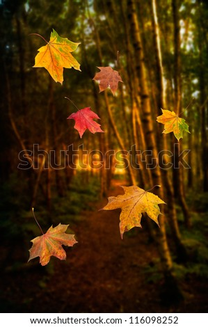 Falling leaves against autumnal forest setting