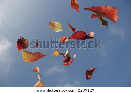 falling leaves from blue sky