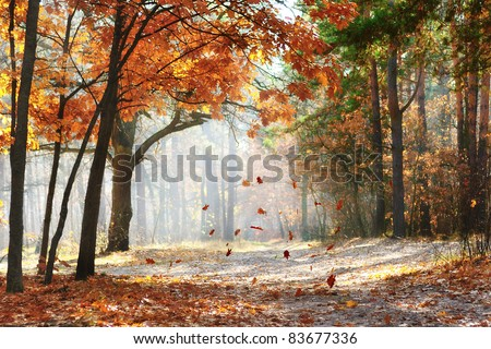 Falling oak leaves on the scenic autumn forest illuminated by morning sun - stock photo
