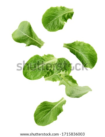 Falling Romain Lettuce leaf isolated on white background, clipping path, full depth of field Photo stock ©
