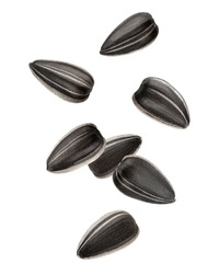 Falling sunflower seed, isolated on white background, clipping path, full depth of field