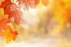 Falling yellow leaves and park bokeh background with sun beams. Autumn landscape.
