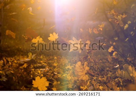 Falling yellow, orange and red autumn leaves in beautiful nature background with sun flare light leak in soft focus