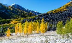 Falls color in Colorado mountain, Aspen, CO