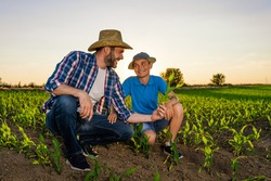 Family farmers are standing in their growing corn field. They are examining crops after successful sowing.