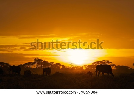Family group of elephants moving through Amboseli National Park at sunset