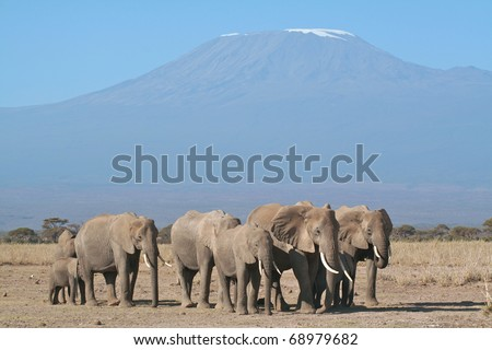 Family group of elephants resting in the open with Mount Kilimanjaro in the background