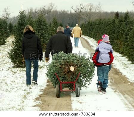 Family hauling their freshly cut Christmas tree