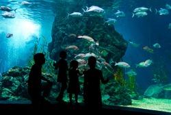Family in oceanarium
