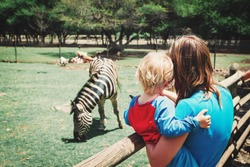 family in zoo- mother and son looking at zebra