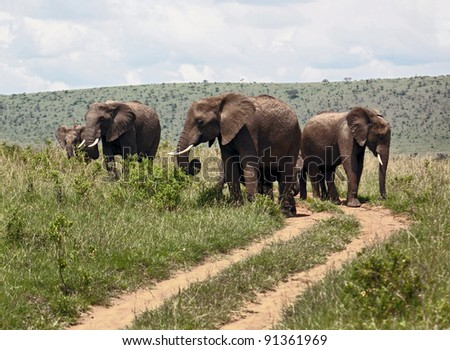 Family of african elephant on the Masai Mara National Reserve - Kenya