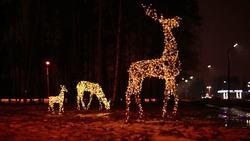 Family of deer bright festive Christmas illuminations