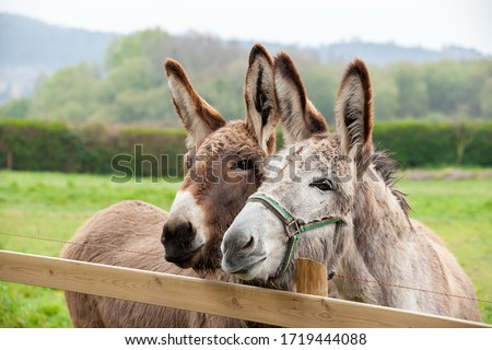 Photo of  Family of donkeys outdoors in spring. Couple of donkeys on the meadow