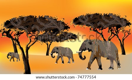 family of elefants against the backdrop of the African sunset