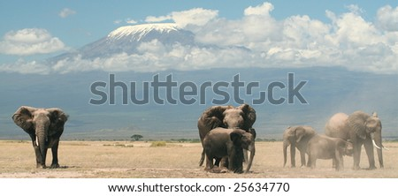 Family of elephant below Kilimanjaro