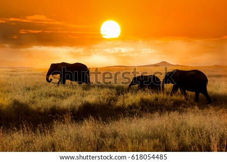 Family of elephants at sunset in the national park of Africa.  - Shutterstock ID 618054485