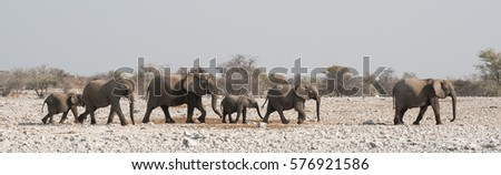 Family of Elephants on the Move