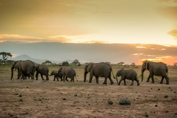 Family of elephants preparing for night as the sunsets in Amboseli National Park in Kenya