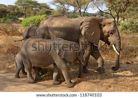 Family of elephants walking along the road in Lake Manyara National Park