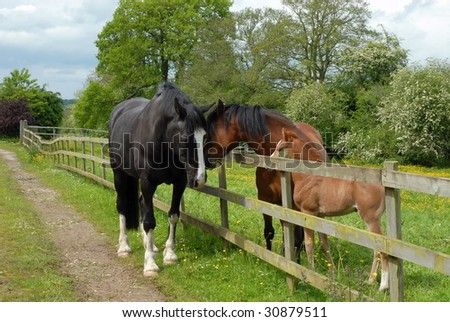 family of horses in a paddock