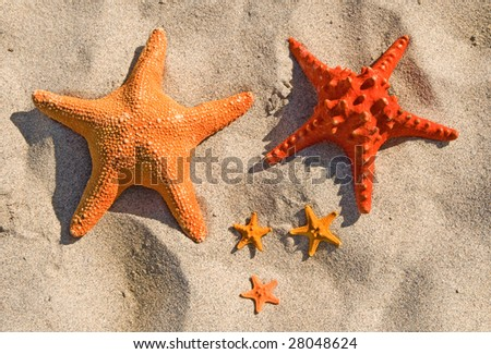 Family of large and small starfish on a sandy beach.