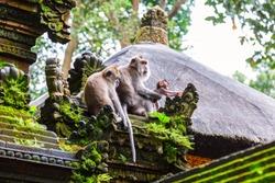 Family of monkeys near Tample in Monkey Forest, Ubud, Bali, Indonesia
