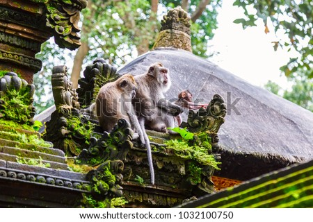 Family of monkeys near Tample in Monkey Forest, Ubud, Bali, Indonesia