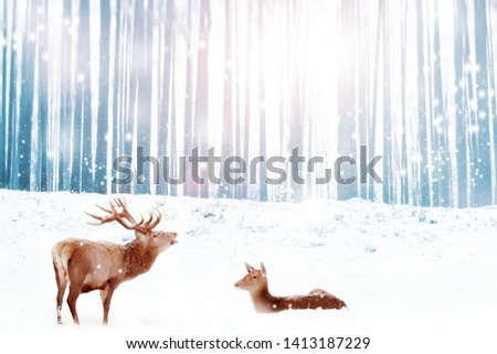 Family of noble deer in a snowy blue winter forest. Christmas fantasy image. Winter wonderland.