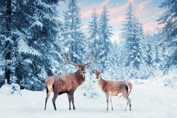 Family of noble deer in a snowy winter forest at sunset. Christmas fantasy image in blue and white color. Pink clouds. Snowing. Winter wonderland.
